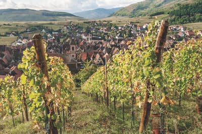 Vineyards overlooking, Riquewih