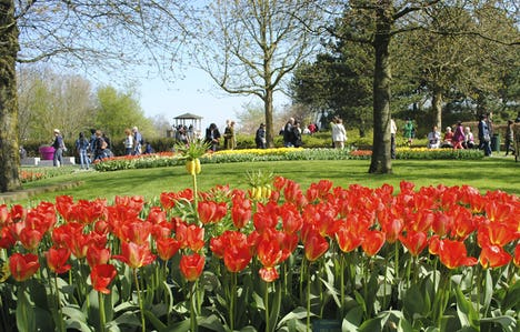 Floralia Spring Flower Show, The Dutch Bulbfields, Antwerp & Ghent