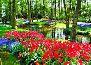 Floralia Flower Show, Dutch Bulbfields, Antwerp & Ghent