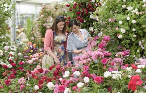 Chelsea Flower Show, Henley & Oxford