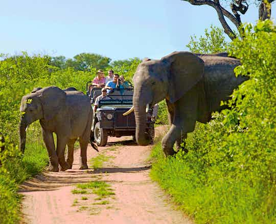 Kruger National Park Open Safari