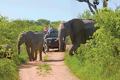 Kruger National Park Open Safari
