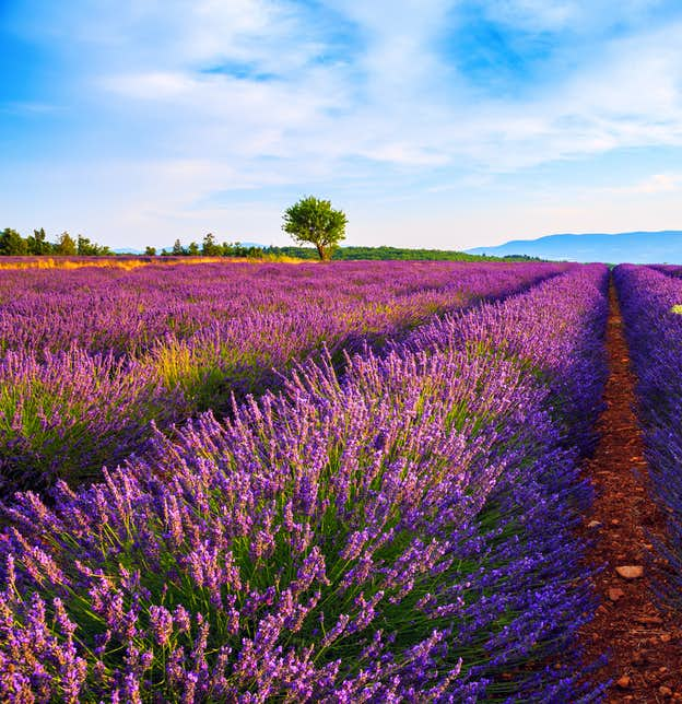 The Perfumes and Colours of Provence