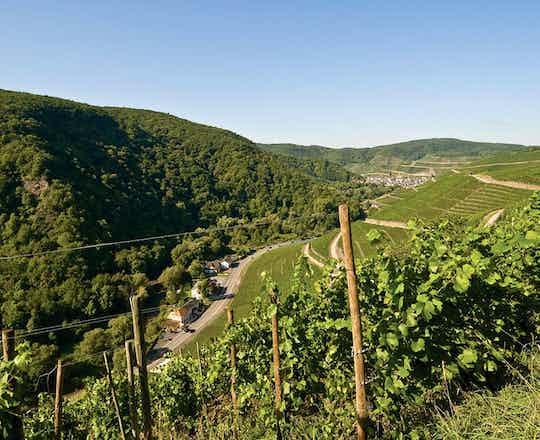 Ahr Valley Wine Tasting