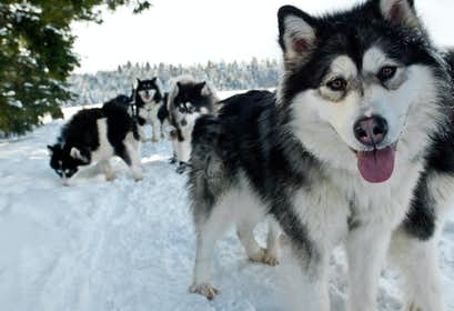 Bavarian Forest Winter Wonderland – 'Huskies' & Igloos