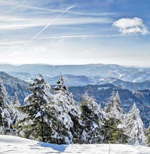 Christmas in the Black Forest