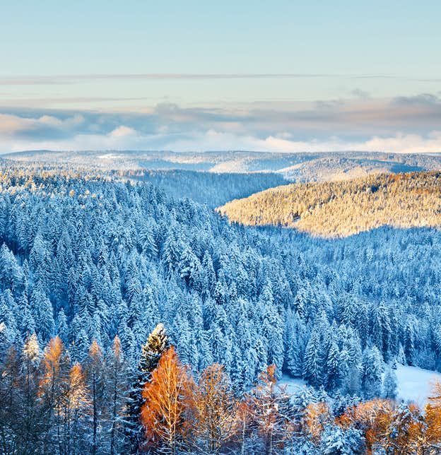 Black Forest Winter Wonderland
