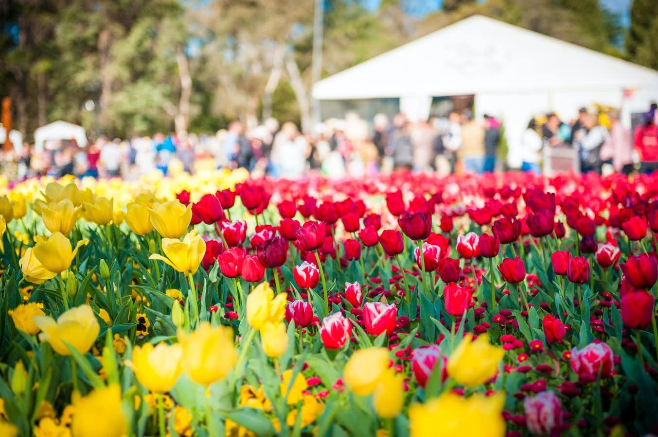 Floriade & Colourful Keukenhof Park