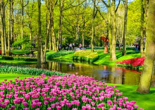 Dutch Bulbfields and Amsterdam