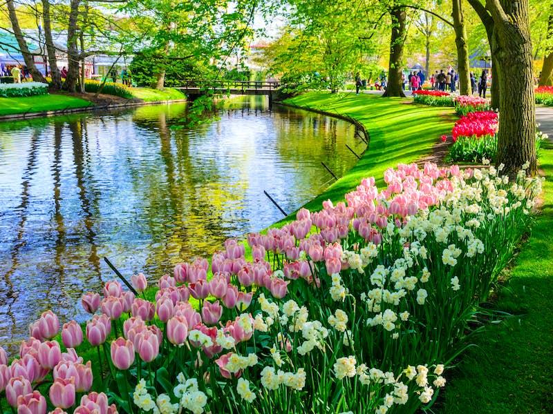 Floralia Flower Show Dutch Bulbfields Antwerp Amp Ghent