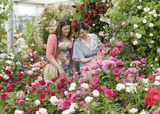 Chelsea Flower Show, Henley & Oxford